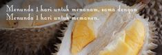 Jual Bibit Durian Super / Musang King / Bawor / Montong / Merah / Duri Hitam BIBIT DURIAN SEGAR - Dairy, Cheese, Food, Meal, Essen, Hoods, Meals, Eten