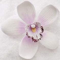 "Wholesale Sugar Flowers - 3-1/2"" Cymbidium Orchid - Large - Sylvan Candy White w/ Lavender (9 per box), $14.99 (http://www.wholesalesugarflowers.com/3-1-2-cymbidium-orchid-large-sylvan-candy-white-w-lavender-9-per-box/)"