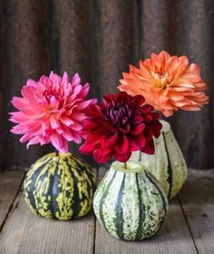 Winter squash vases - stylish decorating ideas from The Crafted Garden book - read post for more unusual DIY tips Garden Party Decorations, Halloween Decorations, Container Gardening, Gardening Tips, Garden Line, Vintage Garden Parties, Garden Sprinklers, Autumn Decorating, Decorating Ideas