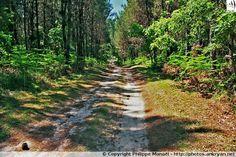 Chemin forestier situé à la sortie de Roquefort (Aquitaine, Landes)