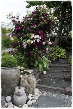 Parkvegens Hageglede Clematis, Garden Sculpture, Sidewalk, Outdoor Decor, Flowers, Plants, Gardens, Side Walkway, Outdoor Gardens