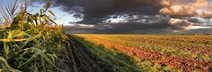 Selling Farmland or a Ranch: IRC Section 121 and Section 1031