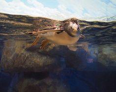 Tennessee Aquarium, Chattanooga TN