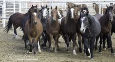 Wild Horses - Photographing the Wyoming Checkerboard Horses at Canon City - They NEED homes!