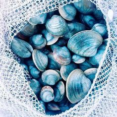 Happy mornings collecting shells, happy afternoons crafting with shells