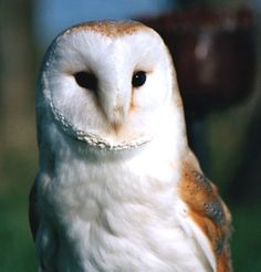 I just really want a pet owl to deliver my mail.