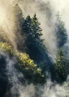 Misty Forest, Black forest Germany…by Steffen Egly Forest Tumblr, Beautiful World, Beautiful Places, Landscape Photography, Nature Photography, Travel Photography, Black Forest Germany, Misty Forest, Forest Light