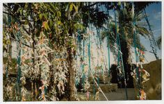 the wish tree at the salvador dali museum in st. petersburg, florida