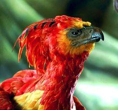 Ideas Phoenix Bird Drawing Art Harry Potter For 2019 Harry Potter Witch, Harry Potter Couples, Phoenix Harry Potter, Harry Potter Wand, Harry Potter Books, Pretty Birds, Beautiful Birds, Warwick Goble, Phoenix Bird