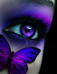Colours | A Purple Butterfly - could be flying around the Realm of the Purple…