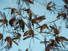 Waterlogging To Blame - 426 dengue cases in city this year - Times of India #757Live