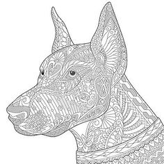 Vector: Stylized doberman pinscher dog, isolated on white background. Freehand sketch for adult anti stress coloring book page with doodle and zentangle elements. Dog Coloring Page, Adult Coloring Book Pages, Doodle Coloring, Animal Coloring Pages, Colouring Pages, Coloring Books, Mini Doberman, Doberman Pinscher Dog, Doberman Dogs