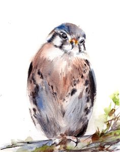 Kestrel Bird Watercolor Painting Art Print, Watercolour Bird, Wall Art, Bird Illustration, Bird Art