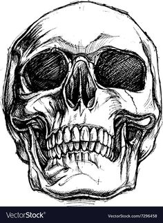 Vector Art : Skull Drawing line work vector Skeleton Drawings, Dark Art Drawings, Skeleton Art, Art Drawings Sketches, Tattoo Drawings, Simple Drawings, Realistic Drawings, Kawaii Drawings, Beautiful Drawings