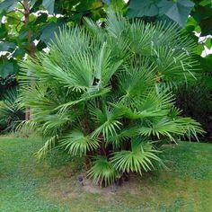 10 plantes exotiques et rustiques pour jardin jungle - Blog Promesse de fleurs