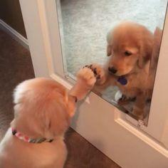 """いいね!32.2千件、コメント275件 ― Dogs Of Instagramさん(@lnsta_dogs)のInstagramアカウント: 「From @tequila_gold_cle: """"Today is gonna be your day! Say it with me! """"」"""