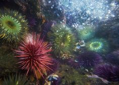 Scour the tide pools in Palos Verdes' Abalone Cove.    tidepool-sea-urchin-20100128_0120.jpg 600×428 pixels