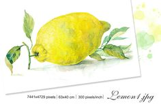 "Set Watercolor ""Lemons"" by Marina.Markizova on @creativemarket"