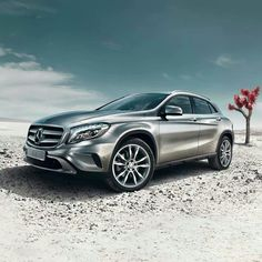 Scrumptious Mercedes