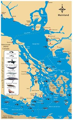 San Juan Islands map w/ cetacean ranges. Ferry riders has the opportunity to see many types of wildlife-minke whales are pretty common sight but much more shy than the spectacular orcas, which typically range close to the San Juan Islands.