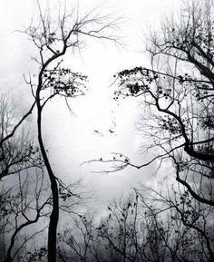 Hidden images in the paintings illusions Octavio Ocampo - Image Illusion, Illusion Art, Mother Earth, Mother Nature, Illusion Kunst, Illusion Paintings, Hidden Images, Tree Faces, Tree Art