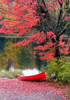 ~~Red and Red ~ red boat, red leaves, autumn in Ontario, Canada by Alexander Reef~~