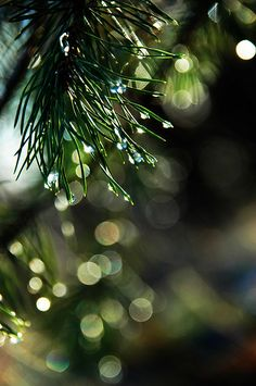 Raindrop Bokeh by Fiona * lunasdal on Flickr