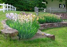 I love love love this iris garden idea! And we have the perfect place for it! Can't wait to add this beauty's to Casa Johnson's landscaping! Tops the list...after transplanting a bunch of other stuff first of course!