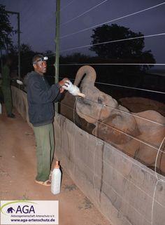 Mit zwei Flaschen Milch beginnen die Elefantenwaisen den Tag. Danach erkunden sie mit ihren Pflegern den Tsavo East Nationalpark. Nairobi, Elephants, National Forest, Explore, Milk, Flasks