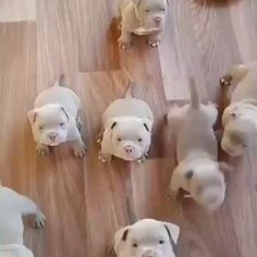 puppies cutest funny videos * puppies cutest funny & puppies cutest funny hilarious & puppies cutest funny videos & puppies cutest funny memes & puppies cutest funny baby & puppies cutest funny so cute Cute Funny Animals, Cute Baby Animals, Funny Dogs, Animals And Pets, Funny Puppies, Funny Memes, Videos Funny, Cute Dogs And Puppies, Baby Puppies