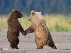 「bear」の検索結果 - Yahoo!検索(画像)