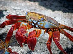 New free stock photo of beach crab colorful   Download it on Pexels