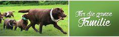 Hundehalsband,Hundeleinen,Halstücher und Spielzeug werden nach Ihrem Wunsch exklusiv in Handarbeit gefertigt. Sie können das Leder, das Gurtband und die Borte selbst auswählen Hier finden Sie alles was Sie für Ihren Hund brauchen