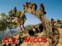 PROJECTE dels MICOS