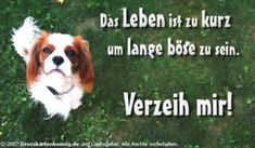 Entschuldigung bild Christian Dating, Andreas, Dating Advice, Animals, Humor, Cards, I Am Sorry, Lifes Too Short, Forgive