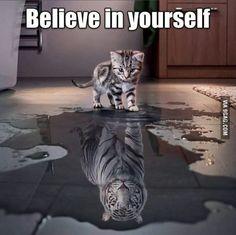 Inside every kitten is a tiger!