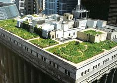 grass-covered green roof