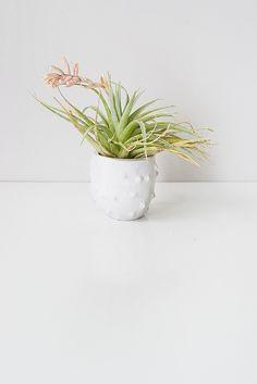 stone fruit planters // #ornhansen | coming home | Pinterest ...
