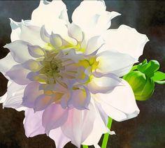 Pale Pink Dahlia - Brian Davis - oil on canvas