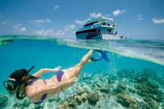 The best Southern Great Barrier Reef snorkel spots for families