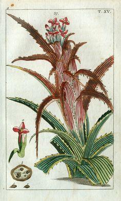 Wilhelm Natural History Botanical Prints 1810