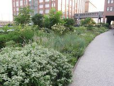Piet Oudolf Public gardens - High Line -