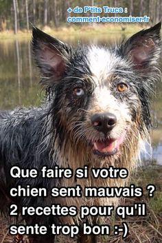 le bicarbonate et le savon noir font suppriment les mauvaises odeurs des chiens
