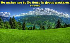GREEN PASTURES :)