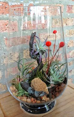 One Of A Kind Large Easy Care Low Maintenance Air Plant Terrarium - A Unique Birthday or Housewarming Gift
