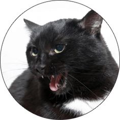Cat aggression can be a serious problem for both people and cats. Identifying the causes of an aggressive cat can be difficult. Batman Bookshelf, Les Parasites, Ugly Cat, La Constipation, Pale Face, Medical Examination, Shopping, Animales, Tips