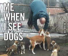 Me when I see dogs