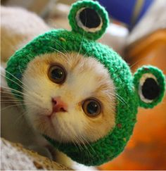 Pet Hat Dog Cat Pet Cap Handmade Knitted Woolen Yarn Hat for Puppy Teddy Cartoon Frog Animal Dog Cat Grooming Accessories Apparels Green M * Details can be found by clicking on the image-affiliate link. Animal Costumes, Pet Costumes, Funny Hats, Decoration Christmas, Knitted Cat, Small Cat, Small Dogs, Cat Accessories, Cat Hat