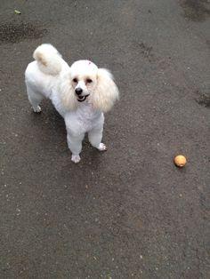 Throw the ball PLEASE! (Vanilla Rose)