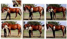 Teach Your Horse to Halt Square